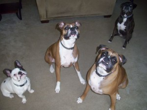 Hugo, Bailey, Domino and Mia